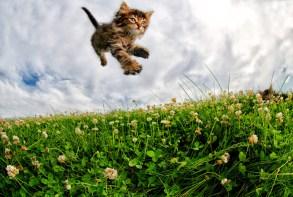 Adorables gatitos fotografiados en el momento mas divertido