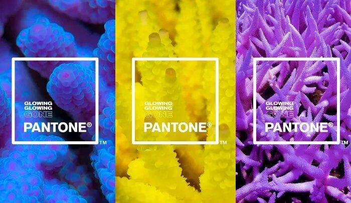 Pantone y Adobe crean una paleta de colores